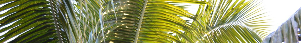 cropped-palm-fronds-1.jpg